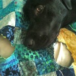 Max and the Quilt